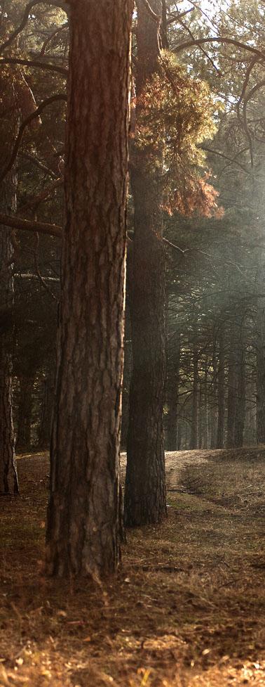 forest-gospel-landmark-2